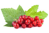 Redcurrant with leaf isolated on white background — Stock Photo