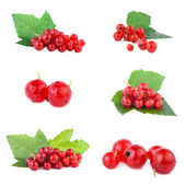 Redcurrant collection — Stock Photo
