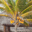 Palm tree — Stock Photo #16260199