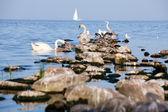 Kuşlar buzlu — Stok fotoğraf
