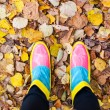 Colourful autumn — Stock Photo