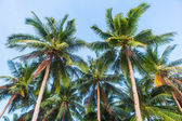 Palms all around — Stockfoto