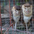 Owls in the zoo — Stock Photo