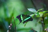Vahşi doğada kelebek — Stok fotoğraf