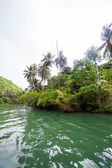 Green river bank in Philippines — Stockfoto