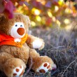 Teddy bear lost in forest — Stock Photo
