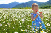 Delight from wild camomile — Stock Photo