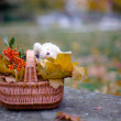 Basket with yellow leaves, berries and teddy bear — Stock Photo