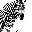 Zebra — Stock Photo #24173507