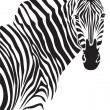 Zebra — Stock Vector #34680267