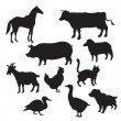 Stock Vector: Silhouettes of domestic animals