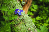 Violet flower on the tree bark — Stock Photo