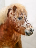 Dappled pony — Stock Photo