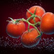 Close-up of tomatoes - Stock Photo