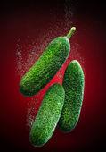 Gros plan de concombre — Photo