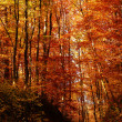 Leafs in autumn forest — Stock Photo