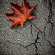 Maple leaf on broken pavement — Stock Photo #32065421