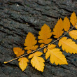 Autumn leaf on the ground — Stock Photo