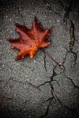 Hoja de arce en el pavimento roto — Foto de Stock