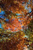Cupola of colors leaves — Stock Photo
