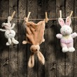 Plush bunnies on the clothesline, wooden background — Stock Photo