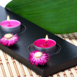 Green leaf with flower and candles — Stock Photo