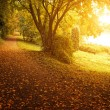 Autumn park — Stockfoto #38111283