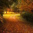 Autumn park — Stock Photo #38111323