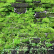 Old stone wall with green moss - Foto de Stock