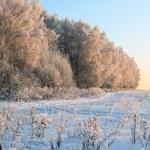 Winter landscape in sunset light — Stock Photo