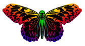 Colorful butterfly — Stock Vector