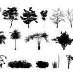 Silhouette tree — Stock Photo