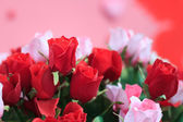 Red and pink roses close up for background  — Stock Photo
