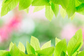 Abstract colorful spring background  — Stock Photo
