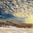 Wonderful winter landscape — Stock Photo
