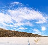Piękny krajobraz zimowy pola z tropy zwierząt — Zdjęcie stockowe