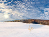 Winter field landscape — Stock Photo