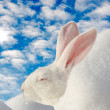 Foto Stock: White rabbit warm up on winter sun