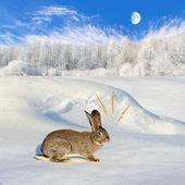 šedý králík sedící na kopci sněhu vazbou — Stock fotografie