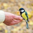 图库照片: Bird takes nut from humhand