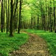 Forest way in the afternoon — Stock Photo