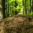 Anthill in the deciduous forest — Stock Photo