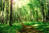 Sfondo sfocato foresta — Foto Stock