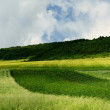 Panorama of agricultural land — Stock Photo