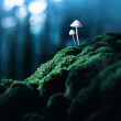 Poisonous mushrooms in the faraway forest — Stock Photo