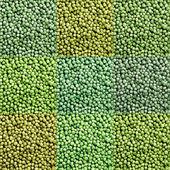 Green peas mix — Stock Photo