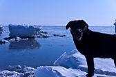 Hond tegen de zee — Stockfoto