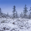 Stock Photo: First snow on abrupt hills