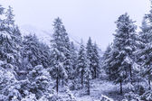 Forest by Snow — Stock Photo