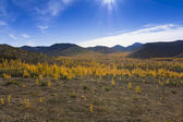 Autumn mountain landscape — Stock Photo